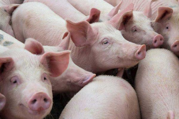 Litera Meat refuerza su compromiso con la formación en Bienestar Animal